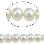Button Beads ujërave të ëmbla kulturuar Pearl, Pearl kulturuar ujërave të ëmbla, 8-9mm, : 0.8mm, :15.5Inç, 44PC/Fije floku,  15.5Inç,