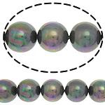 Detit të Jugut Beads Shell, Jug Deti Shell, Round, asnjë, 14mm, : 1mm, :15Inç, 28PC/Fije floku,  15Inç,