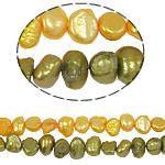 Barok Beads kulturuar Pearl ujërave të ëmbla, Pearl kulturuar ujërave të ëmbla, ngjyra të përziera, 5-6mm, : 0.8mm, :14.5Inç, 10Fillesat/Qese,  Qese