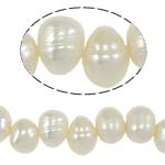 Barok Beads kulturuar Pearl ujërave të ëmbla, Pearl kulturuar ujërave të ëmbla, Një, 7-8mm, : 0.8mm, :14Inç,  14Inç,