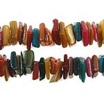 Beads Natyrore Colored Shell, Predhë, Nuggets, asnjë, ngjyra të përziera, 8-10mm, : 1.5mm, :28Inç, 10Fillesat/Qese,  Qese