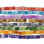 Beads Natyrore Colored Shell, Predhë, Katror, asnjë, ngjyra të përziera, 8x8x3mm, : 1.5mm, :15.5Inç, 10Fillesat/Qese,  Qese