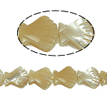 Sea Shell Beads, original color, 10x10x3mm, Hole:Approx 1mm, 39PCs/Strand, Sold Per 15.5 Inch Strand