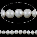 Barok Beads kulturuar Pearl ujërave të ëmbla, Pearl kulturuar ujërave të ëmbla, e bardhë, Një, 8-9mm, : 1mm, :15Inç,  15Inç,