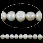 Barok Beads kulturuar Pearl ujërave të ëmbla, Pearl kulturuar ujërave të ëmbla, e bardhë, Një, 7-8mm, : 1mm, :15Inç,  15Inç,