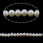 Barok Beads kulturuar Pearl ujërave të ëmbla, Pearl kulturuar ujërave të ëmbla, AA, 2-3mm, : 0.8mm, :15Inç,  15Inç,