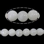 Beads Giant molusqe, Melodik Giant, Round, sintetik, i tejdukshëm, e bardhë, 12mm, : 1mm, : 15Inç, 10Fillesat/Shumë,  Shumë