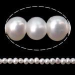 Barok Beads kulturuar Pearl ujërave të ëmbla, Pearl kulturuar ujërave të ëmbla, AA, 2-2.5mm, : 0.5mm, :15.7Inç,  15.7Inç,