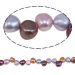Barok Beads kulturuar Pearl ujërave të ëmbla, Pearl kulturuar ujërave të ëmbla, i lyer, ngjyra të përziera, 7-8mm, : 1mm, : 15.0Inç,  15.0Inç,