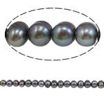 Barok Beads kulturuar Pearl ujërave të ëmbla, Pearl kulturuar ujërave të ëmbla, i lyer, vjollcë e errët, 5-6mm, : 1mm, :15.4Inç,  15.4Inç,