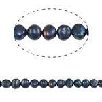 Barok Beads kulturuar Pearl ujërave të ëmbla, Pearl kulturuar ujërave të ëmbla, Nuggets, i lyer, blu, 8-9mm, : 0.8mm, : 15Inç,  15Inç,