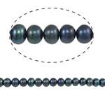 Button Beads ujërave të ëmbla kulturuar Pearl, Pearl kulturuar ujërave të ëmbla, Round, i lyer, blu, 5-6mm, : 0.8mm, :15Inç,  15Inç,