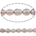 Rajs Beads ujërave të ëmbla kulturuar Pearl, Pearl kulturuar ujërave të ëmbla, Oriz, asnjë, vjollcë, Një, 9-10mm, : 0.8mm, :14.7Inç,  14.7Inç,