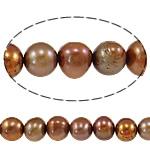 Barok Beads kulturuar Pearl ujërave të ëmbla, Pearl kulturuar ujërave të ëmbla, Oval, i lyer, kuqalashe-kafe, 8-9mm, : 0.8mm, :15.3Inç,  15.3Inç,
