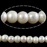 Round Beads kulturuar Pearl ujërave të ëmbla, Pearl kulturuar ujërave të ëmbla, asnjë, e bardhë, Një, 10-11mm, : 3mm, :15Inç,  15Inç,