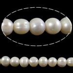 Barok Beads kulturuar Pearl ujërave të ëmbla, Pearl kulturuar ujërave të ëmbla, Round, asnjë, e bardhë, 9-10mm, : 1.5mm, : 15Inç,  15Inç,