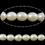 Rajs Beads ujërave të ëmbla kulturuar Pearl, Pearl kulturuar ujërave të ëmbla, Oriz, asnjë, e bardhë, Një, 4-5mm, : 0.8mm, : 14.5Inç,  14.5Inç,