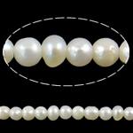 Barok Beads kulturuar Pearl ujërave të ëmbla, Pearl kulturuar ujërave të ëmbla, Round, asnjë, e bardhë, 2-3mm, : 0.8mm, :15.3Inç,  15.3Inç,