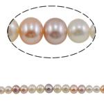Round Beads kulturuar Pearl ujërave të ëmbla, Pearl kulturuar ujërave të ëmbla, asnjë, ngjyra të përziera, AA, 3-9mm, : 0.8mm, : 15.5Inç,  15.5Inç,
