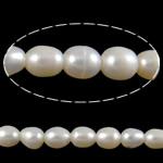 Rajs Beads ujërave të ëmbla kulturuar Pearl, Pearl kulturuar ujërave të ëmbla, Oriz, natyror, e bardhë, Një, 8-9mm, : 2mm, :15Inç,  15Inç,