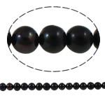 Barok Beads kulturuar Pearl ujërave të ëmbla, Pearl kulturuar ujërave të ëmbla, Round, natyror, e zezë, 6-7mm, : 1mm, :14.7Inç,  14.7Inç,