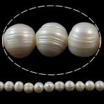 Barok Beads kulturuar Pearl ujërave të ëmbla, Pearl kulturuar ujërave të ëmbla, Round, natyror, e bardhë, 11-12mm, : 1mm, : 15.3Inç,  15.3Inç,