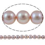 Round Beads kulturuar Pearl ujërave të ëmbla, Pearl kulturuar ujërave të ëmbla, natyror, vjollcë, AA, 10-11mm, : 1mm, : 15.7Inç,  15.7Inç,