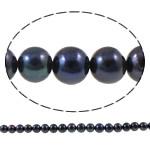Round Beads kulturuar Pearl ujërave të ëmbla, Pearl kulturuar ujërave të ëmbla, natyror, e zezë, 8-9mm, : 0.8mm, : 15Inç,  15Inç,