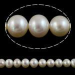 Round Beads kulturuar Pearl ujërave të ëmbla, Pearl kulturuar ujërave të ëmbla, natyror, e bardhë, 10-11mm, : 0.8mm, : 15.7Inç,  15.7Inç,