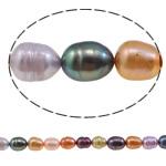 Rajs Beads ujërave të ëmbla kulturuar Pearl, Pearl kulturuar ujërave të ëmbla, Oriz, i lyer, ngjyra të përziera, 5-6mm, : 0.8mm, : 15.5Inç,  15.5Inç,