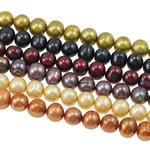 Patates Beads ujërave të ëmbla kulturuar Pearl, Pearl kulturuar ujërave të ëmbla, i lyer, ngjyra të përziera, 8-9mm, : 0.8mm, : 16.5Inç, 50Fillesat/Qese,  Qese