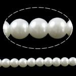 Glass Beads Moda, Xham, Round, asnjë, ngjyra të forta, e bardhë, 8mm, : 1mm, : 32Inç, 10Fillesat/Qese,  Qese