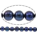 Patates Beads ujërave të ëmbla kulturuar Pearl, Pearl kulturuar ujërave të ëmbla, i lyer, blu të errët, 10-11mm, : 0.8mm, : 14.5Inç,  14.5Inç,