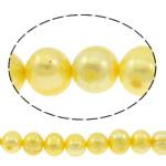 Patates Beads ujërave të ëmbla kulturuar Pearl, Pearl kulturuar ujërave të ëmbla, i lyer, i verdhë, 10-11mm, : 0.8mm, : 14.5Inç,  14.5Inç,