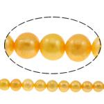 Round Beads kulturuar Pearl ujërave të ëmbla, Pearl kulturuar ujërave të ëmbla, i lyer, i verdhë, 10-11mm, : 0.8mm, :15Inç,  15Inç,
