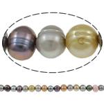 Patates Beads ujërave të ëmbla kulturuar Pearl, Pearl kulturuar ujërave të ëmbla, i lyer, ngjyra të përziera, 8-9mm, : 1mm, : 15.5Inç,  15.5Inç,