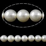 Detit të Jugut Beads Shell, Jug Deti Shell, Round, natyror, asnjë, e bardhë, Një, 10mm, : 1mm, : 15.5Inç, 17Fillesat/KG, approx 40 pcs/Strand,  KG