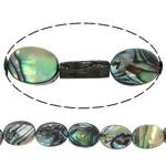 Beads predhë guaskë, Shell Guaskë, Oval Flat, asnjë, asnjë, asnjë, 8x11x3mm, : 1mm, :16Inç, 5Fillesat/Shumë, 38 Pcs/Strand,  Shumë