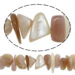 Beads Natyrore Deti Shell, Nuggets, asnjë, asnjë, asnjë, 2-9x7-16, : 1mm, :15Inç, 10Fillesat/Shumë, 85 Pcs/Strand,  Shumë