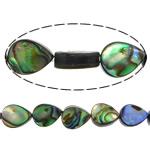 Beads predhë guaskë, Shell Guaskë, Lot, asnjë, asnjë, asnjë, 9x7x3mm, : 1mm, :16Inç, 5Fillesat/Shumë, 44 Pcs/Strand,  Shumë