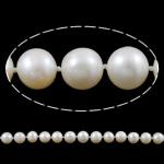 Round Beads kulturuar Pearl ujërave të ëmbla, Pearl kulturuar ujërave të ëmbla, natyror, e bardhë, AA, 9-10, : 1mm, : 17.7Inç,  17.7Inç,