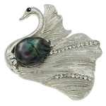 Pearl ujërave të ëmbla karficë, Pearl kulturuar ujërave të ëmbla, with Alloy zink, Mjellmë, ngjyrë platin praruar, me diamant i rremë, asnjë, 47x41x17mm,  PC