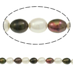 Rajs Beads ujërave të ëmbla kulturuar Pearl, Pearl kulturuar ujërave të ëmbla, Oriz, i lyer, asnjë, ngjyra të përziera, 9-10mm, : 0.8mm, : 16.7Inç,  16.7Inç,