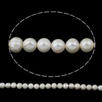 Lagerluft Süßwasser Perlen, Natürliche kultivierte Süßwasserperlen, Keishi, natürlich, weiß, 12-13mm, Bohrung:ca. 0.8mm, verkauft per ca. 14.5 ZollInch Strang