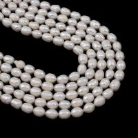 Natürliche kultivierte Süßwasserperlen Perle, Reis, weiß, 7-8mm, Bohrung:ca. 0.8mm, verkauft per ca. 15.5 ZollInch Strang