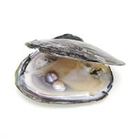 Süßwasser kultivierte Liebe wünschen Perlenaustern, Perlen, keine, 9-10mm, verkauft von PC