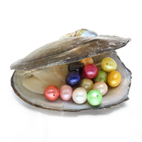 Süßwasser kultivierte Liebe wünschen Perlenaustern, Perlen, Kartoffel, keine, 9-10mm, Bohrung:ca. 0.8mm, verkauft von PC