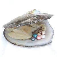 Süßwasser kultivierte Liebe wünschen Perlenaustern, Perlen, halbgebohrt, keine, 6-7mm, Bohrung:ca. 0.8mm, verkauft von PC